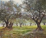 Paysage de Provence - Les oliviers