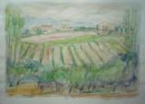 Paysage du Midi - Les vignes #2
