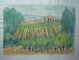 Paysage du Midi - Les vignes #1
