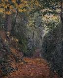 Sous-bois à l'automne