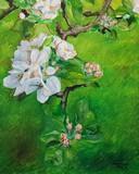 Printemps, fleurs sur la branche